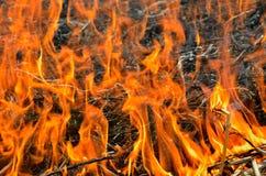 火焰和灰6 库存照片