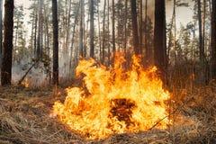 火焰开始损坏在森林火灾的树干 库存图片