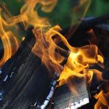 火焰火激发森林自然 免版税库存照片