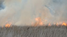 火焰烧干草和灌木 在森林干草原的火,以火的形式自然灾害 股票录像