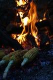 火玉米 免版税库存图片