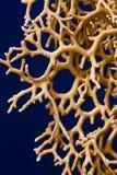 火珊瑚摘要 免版税库存图片