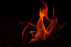 从火的奇怪的生物 免版税图库摄影
