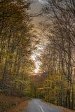 火的森林 免版税图库摄影