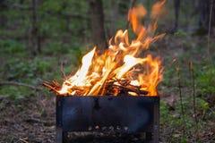 火的火焰在一串烤肉的在一个绿色森林里 库存图片