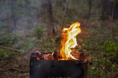 火的火焰在一串烤肉的在一个绿色森林里 图库摄影