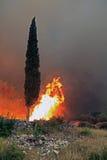 火的赛普里斯 库存图片