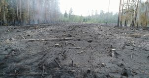 火的,灼烧的树, Bushs森林, 股票视频