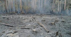 火的,灼烧的树, Bushs森林 影视素材