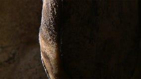 火腿开始对霉 模子推挤火腿入深刻的发酵工艺 库存图片