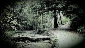 火腿森林 都市森林地普利茅斯 德文郡 免版税库存图片