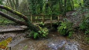 火腿森林 都市森林地普利茅斯 德文郡 图库摄影