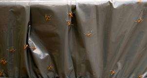 火蚂蚁 库存照片
