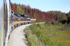火车乘驾在美丽的阿拉斯加 免版税库存照片