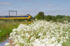 火车在霍赫芬,荷兰通过牧场地 库存图片