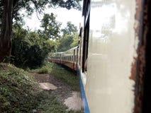 火车旅行通过密林 免版税库存照片