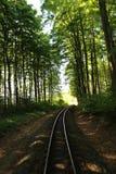 火车轨道在森林 库存图片