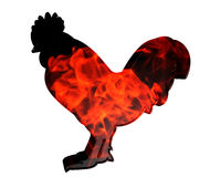 火雄鸡剪影在白色背景的 免版税库存照片