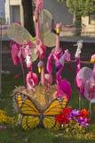 火鸟、蝴蝶和花显示 库存照片