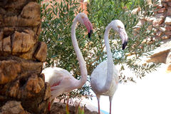 火鸟在埃及动物园居住 免版税图库摄影