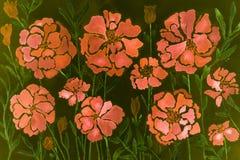 火鸟在深绿背景的桃红色万寿菊印象  库存照片