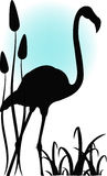 火鸟在水中 免版税图库摄影