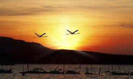 火鸟飞行 图库摄影
