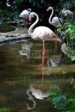 火鸟鸟立场在湖 免版税库存照片