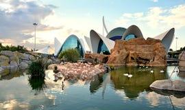 火鸟水池在海洋学中心,巴伦西亚 库存照片