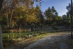 火鸡的冬天公园 库存照片