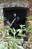 火破坏窗口特写镜头 免版税库存图片