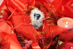 火猴子和红色的年 库存照片