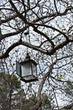 灯在森林里 库存照片