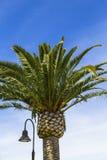灯在清楚的蓝天的岗位和棕榈树 免版税库存图片