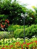 灯在自然绿色植物和花包围的公园 免版税图库摄影