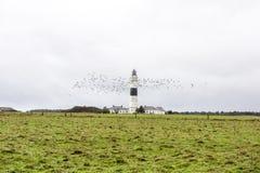 灯塔在叙尔特岛,德国 免版税库存图片