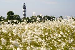 灯塔在波罗的海 从用花装饰的草甸的看法,自然环境 免版税库存图片