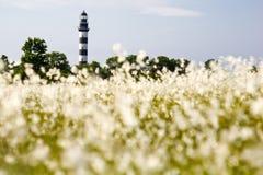 灯塔在波罗的海 从用花装饰的草甸的看法,自然环境 库存照片