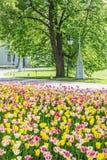 灯笼和一张花床与郁金香,圣彼德堡,俄罗斯 免版税图库摄影