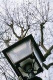 灯笼和光秃的树在都市公园在佛罗伦萨 免版税库存图片