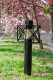灯笼和开花的苹果树 免版税库存图片