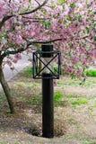 灯笼和开花的苹果树 库存图片