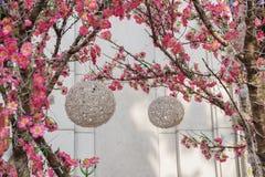 灯笼和桃子开花 库存图片