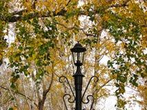 灯笼和秋天树 免版税库存图片