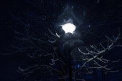 灯笼和背景仿造积雪的分支反对天空 库存照片