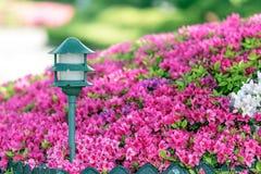 灯笼在佐仓庭院里在阳光天 免版税库存照片