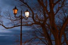 灯笼在公园 库存图片