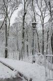 灯笼在树之间的公园在雪 库存照片