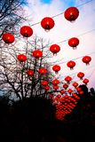 灯笼,春节 免版税图库摄影