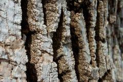 灰接近的绿色结构树 免版税库存图片